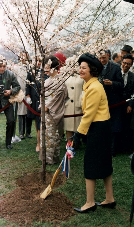 Lady Bird Johnson planting a cherry tree