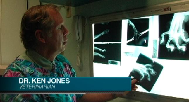 Dr Ken Jones