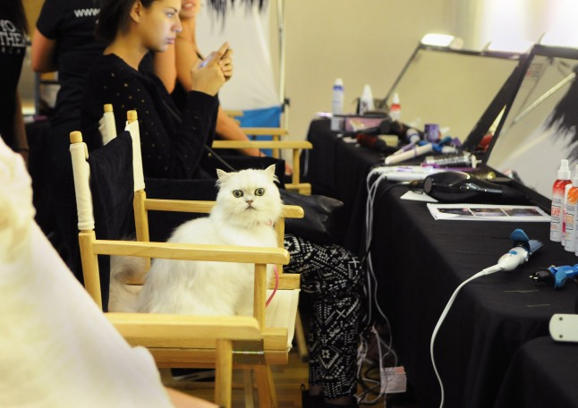 STYLE360 Fashion Show: Malan by Malan Breton Sponsored by Fancy Feast Cat - The Fancy Feast cat prepares backstage for the Malan Breton STYLE360 show during New York Fashion Week on Wednesday, Sept. 11, 2013 in New York City.  Breton's collection featured four looks inspired by the iconic Fancy Feast cat.  (Jonathan Fickies/AP Images for Fancy Feast Gourmet Cat Food)