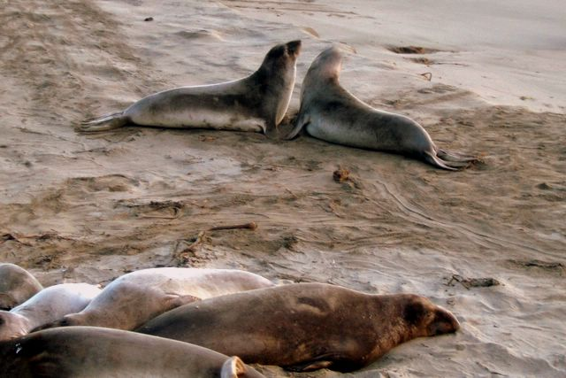Two young males having a fight on Moonstone Beach at Cambria, California