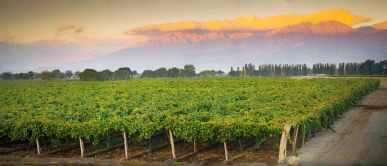 cafayate wineyard