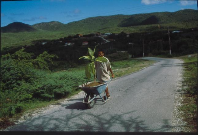 Wilfredo Prieto Walk, 2000 Wheelbarrow, soil, plant, and chromogenic print, overall dimensions variable Solomon R. Guggenheim Museum, New York, Guggenheim UBS MAP Purchase Fund Courtesy the artist and NoguerasBlanchard, Barcelona/Madrid