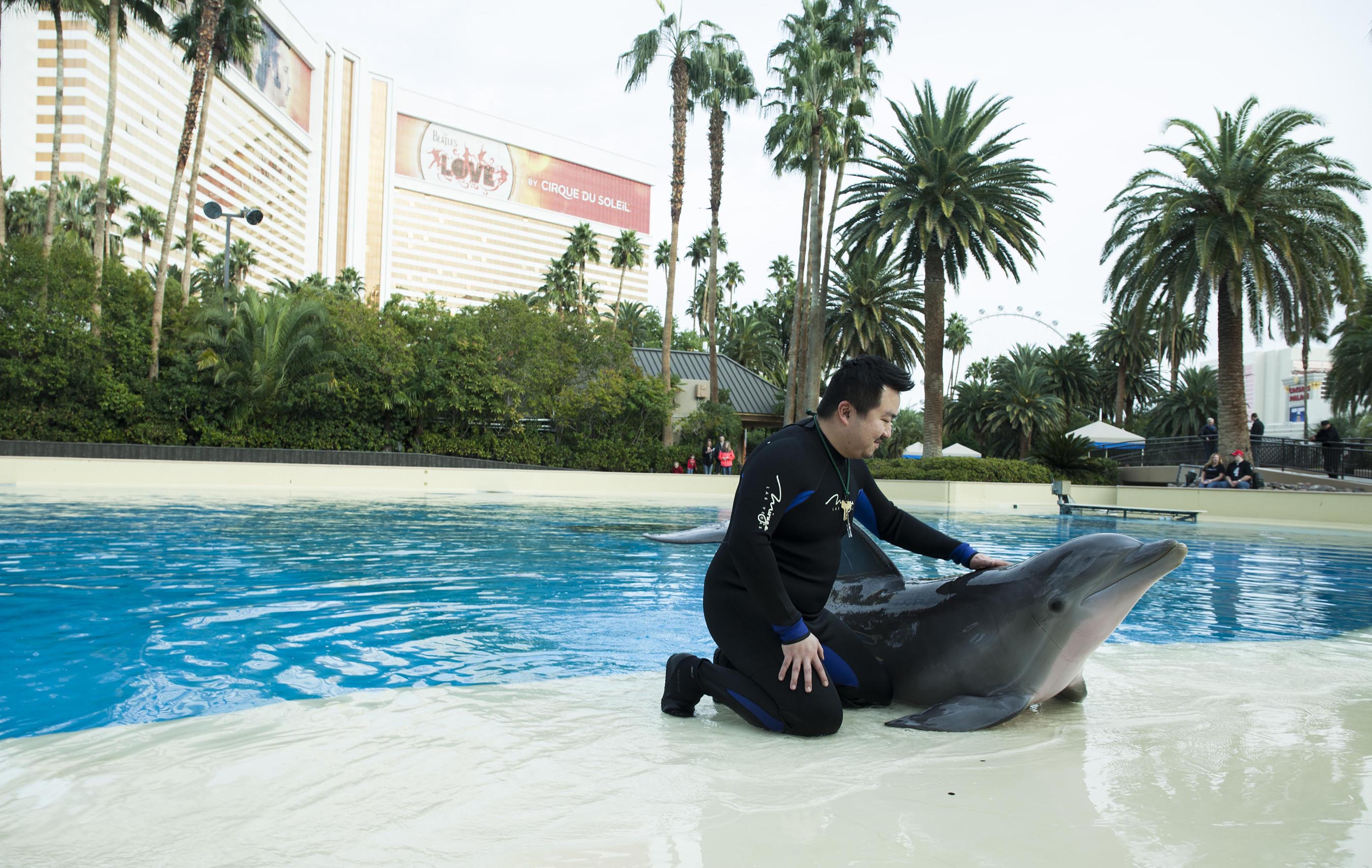 Surprise Winner Enjoys Dolphin Habitat's Trainer for a Day at The Mirage Hotel & Casino