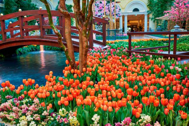 The Japanese-inspired garden boasts a vibrant collection of more than 82,000 flowers, including 12 types of tulips.