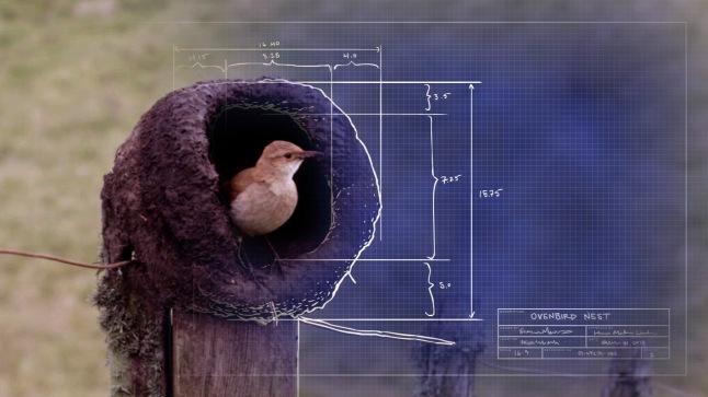 """Ovenbird nest """"blueprint"""" © THIRTEEN Productions LLC"""