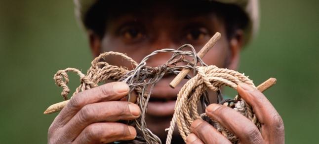 Vatari, anti-poaching patrol member, showing animal snare, Parc National des Volcans, Rwanda