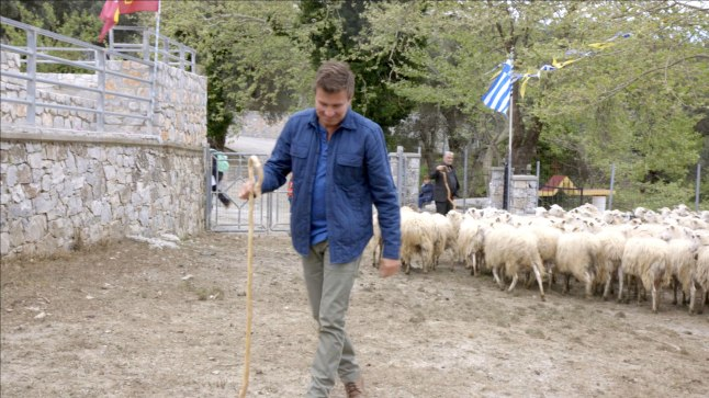 Host Jack Maxwell leads a herd of sheep to the town center in Crete for the St. George Sheep Festival.