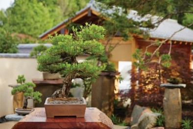Fall Bonsai Show