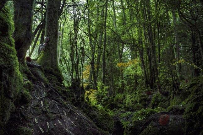 Forest 15 (www.daisyginsberg.com)