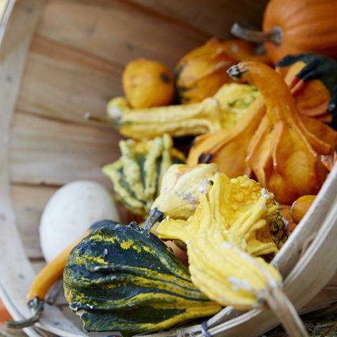 Herb & Gourd Fest