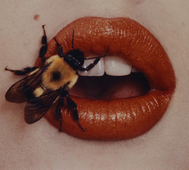 Irving Penn, Bee, New York, 1995, printed 2001, Smithsonian American Art Museum, Promised Gift of The Irving Penn Foundation.