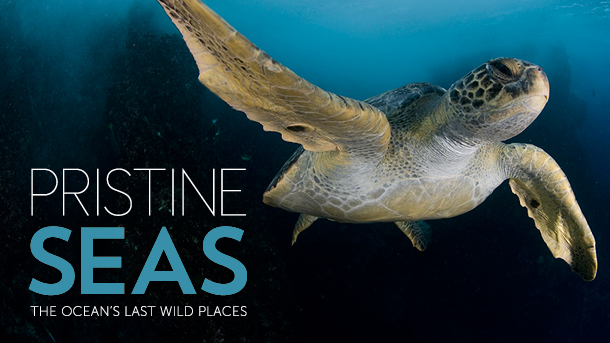 Pristine-Seas-Exhibit-Logo