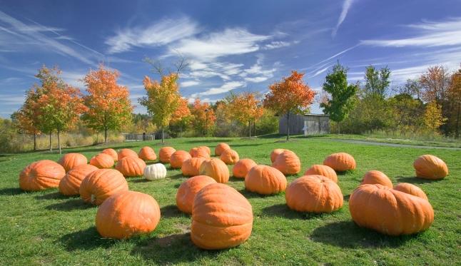 Pumpkins_Hebert