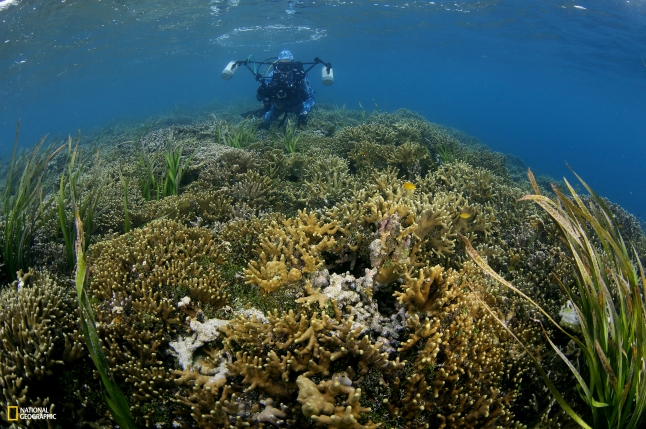 National GeographicPristine Seas: Palau. Photo by Manu San Felix