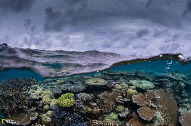 National Geographic Pristine Seas. Photos by Enric Sala/National Geographic