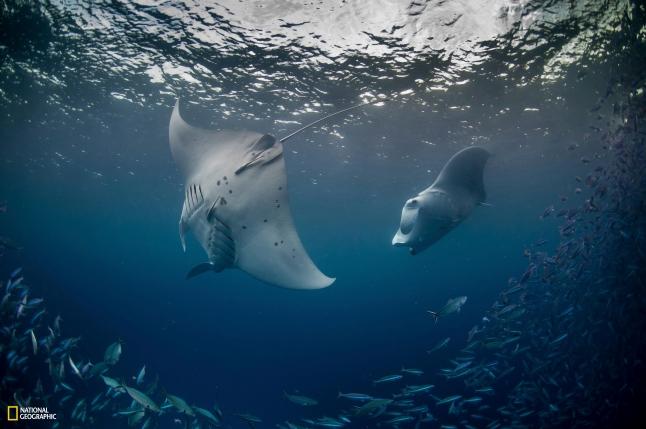 PRISTINE SEAS: PALAU National Geographic Pristine Seas. Photos by Enric Sala/National Geographic