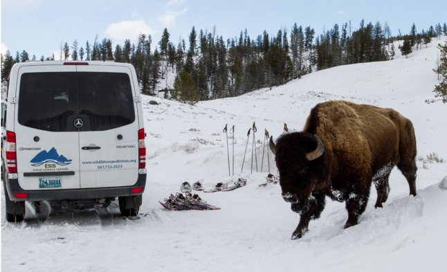 Snowboots and poles are supplied for a Yellowstone hike and guests travel in style via a cozy Mercedes-Benz safari vehicle for Wildlife Expeditions March 2016 Wolf Photo Safari. (Photo by Sean Beckett)