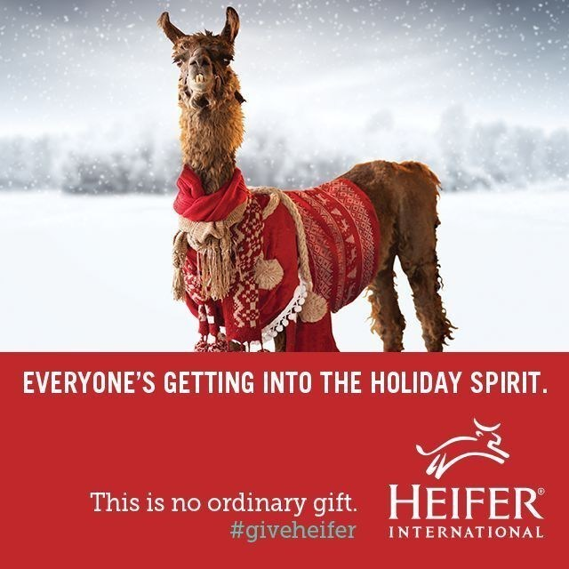 This year our animals are getting into holiday spirit by wearing their favorite holiday sweaters. (PRNewsFoto/Heifer International)