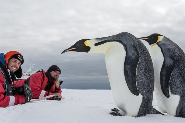Emperor Penguin Couple in the Ross Sea  - Oceanwide Expeditions. Antarctica 15th January - 19th February, 2013 (Rolf Stange)