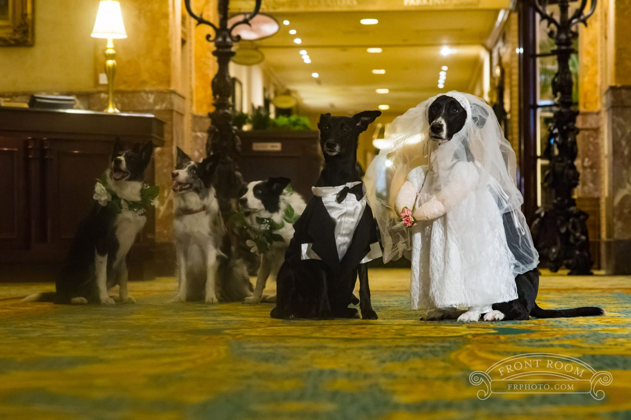 smooches-for-your-pooches-package-at-the-pfister-hotel-photo-business-wire