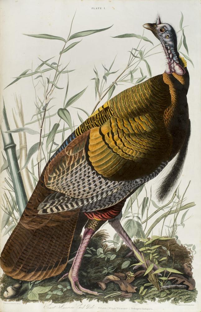 3 WildTurkey_BirdsOfAmerica 1827_Vol1_Pl01