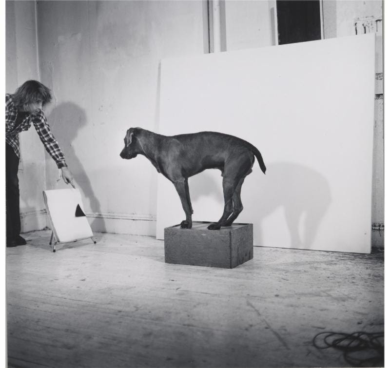 William Wegman, Before-After